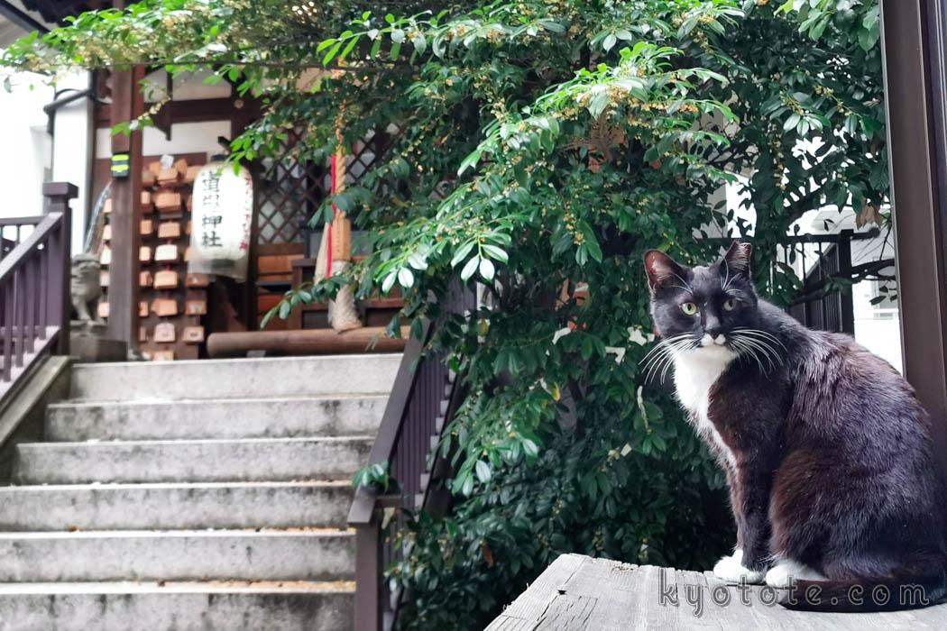 京都の道祖神社の猫