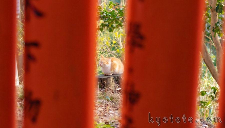 伏見稲荷大社の千本鳥居近くにいた猫