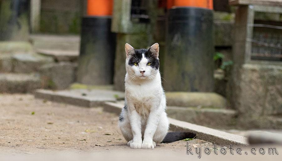 伏見稲荷大社に生息している猫