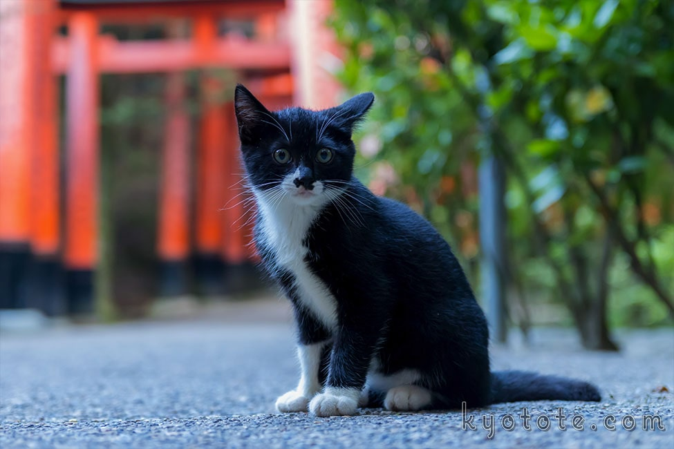 伏見稲荷大社にいた子猫
