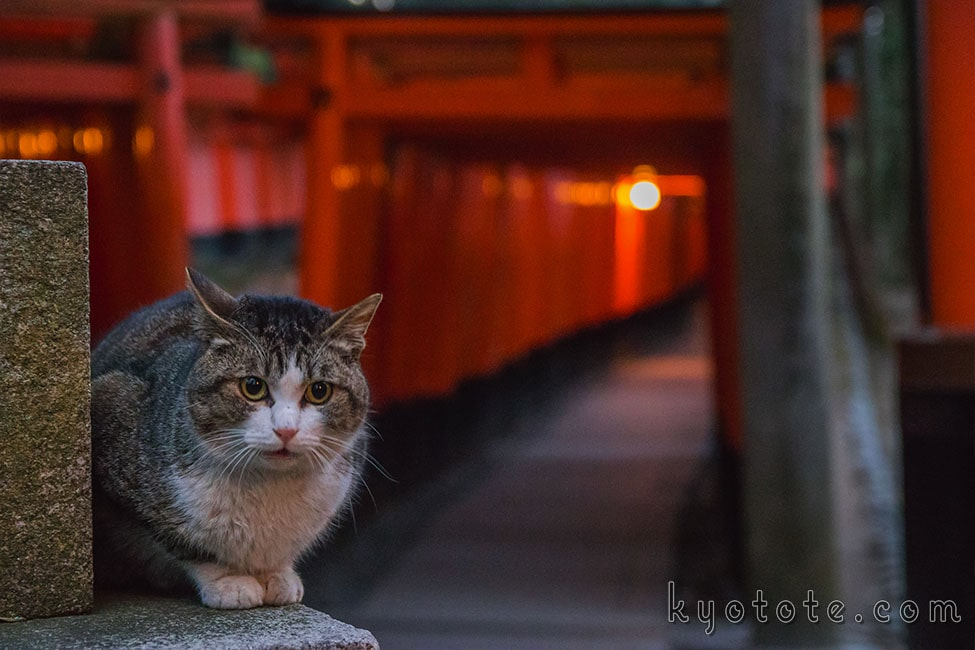 伏見稲荷大社の千本鳥居前にいた猫
