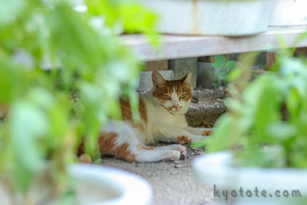 京都の行願寺でくつろぐ猫